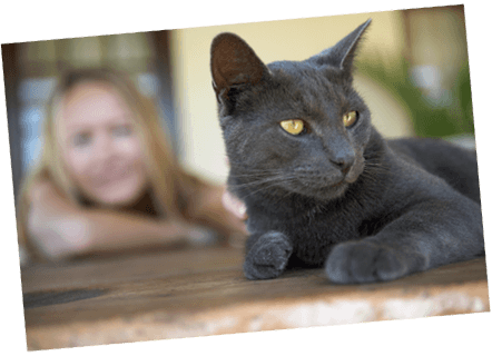 Black cat with Healthy Paws Kitten Insurance